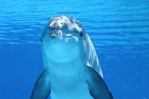 dolphin-203875_960_720